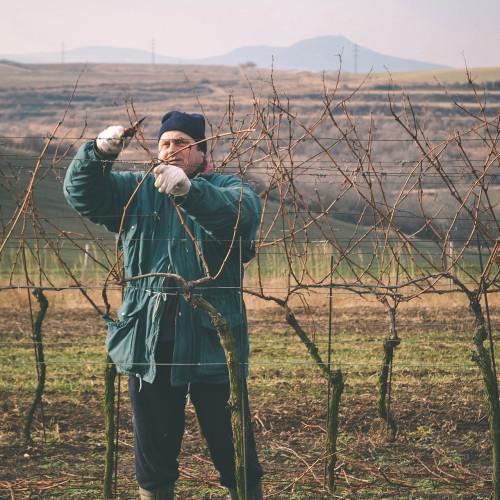 Sklep Blaha Vinohrad vinice Vinařský sklep Němčičky